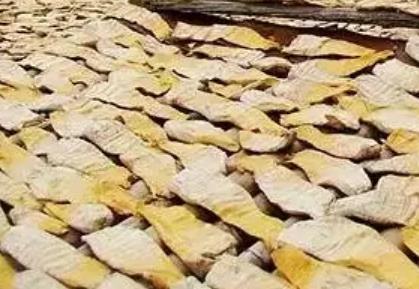 潮州江东竹笋:潮州市江东镇蓬洞村特产农产品麻竹笋,产地宝