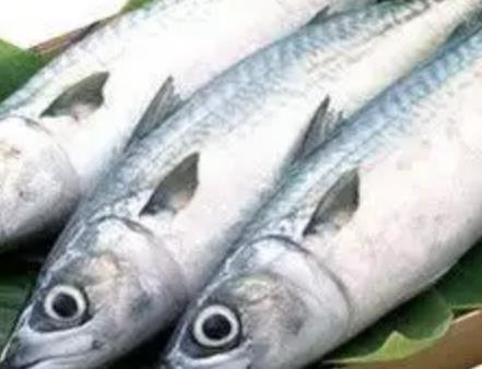 赣榆马鲛鱼:连云港市赣榆区特产马鲛鱼,产地海产品,产地宝