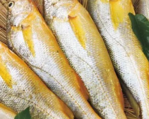 赣榆大黄鱼:连云港赣榆海头镇特产大黄花鱼,产地海产品,产地宝
