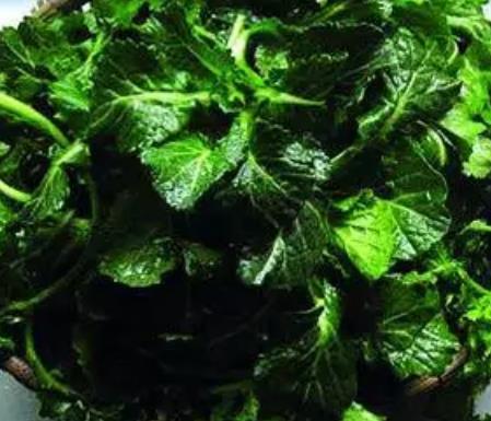 海州过寒菜:连云港海州古城特产过寒菜,产地农产品蔬菜,产地宝