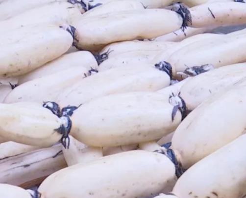高涧莲藕:重庆黔江区城东高涧社区特产莲藕,产地水产品莲藕,产地宝